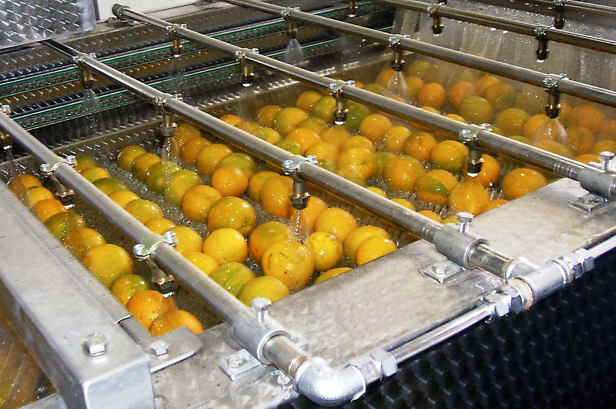 Linha de lavagem de frutas